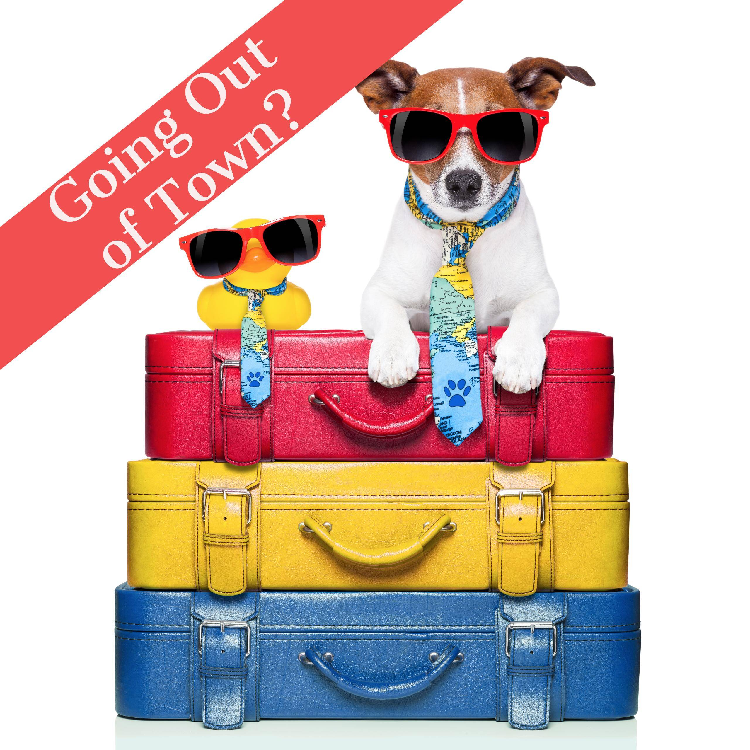 Best Dog Training and Boarding