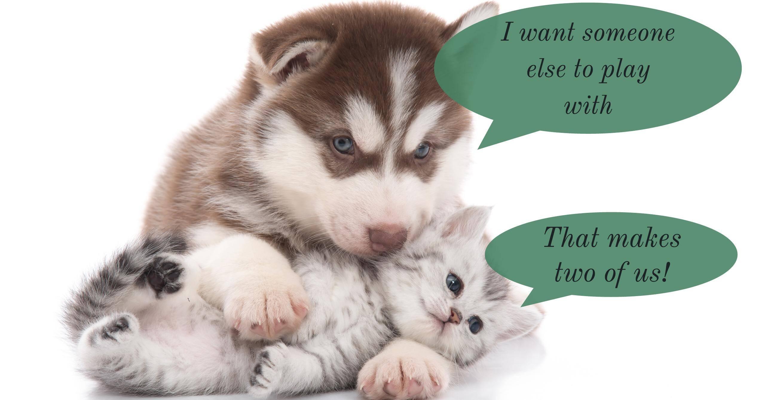 Best Dog Training Daycare