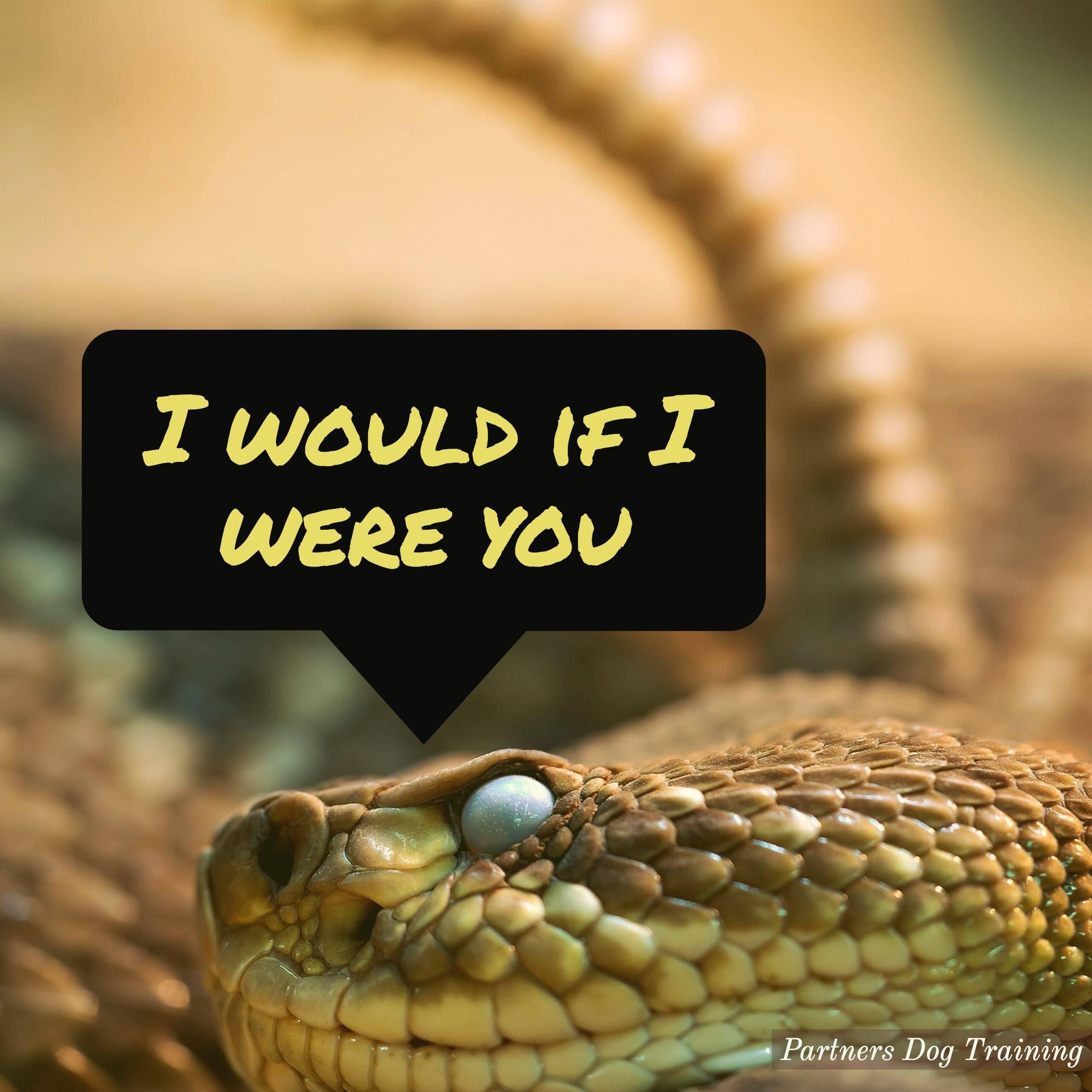Best Dog Snake Avoidance Training