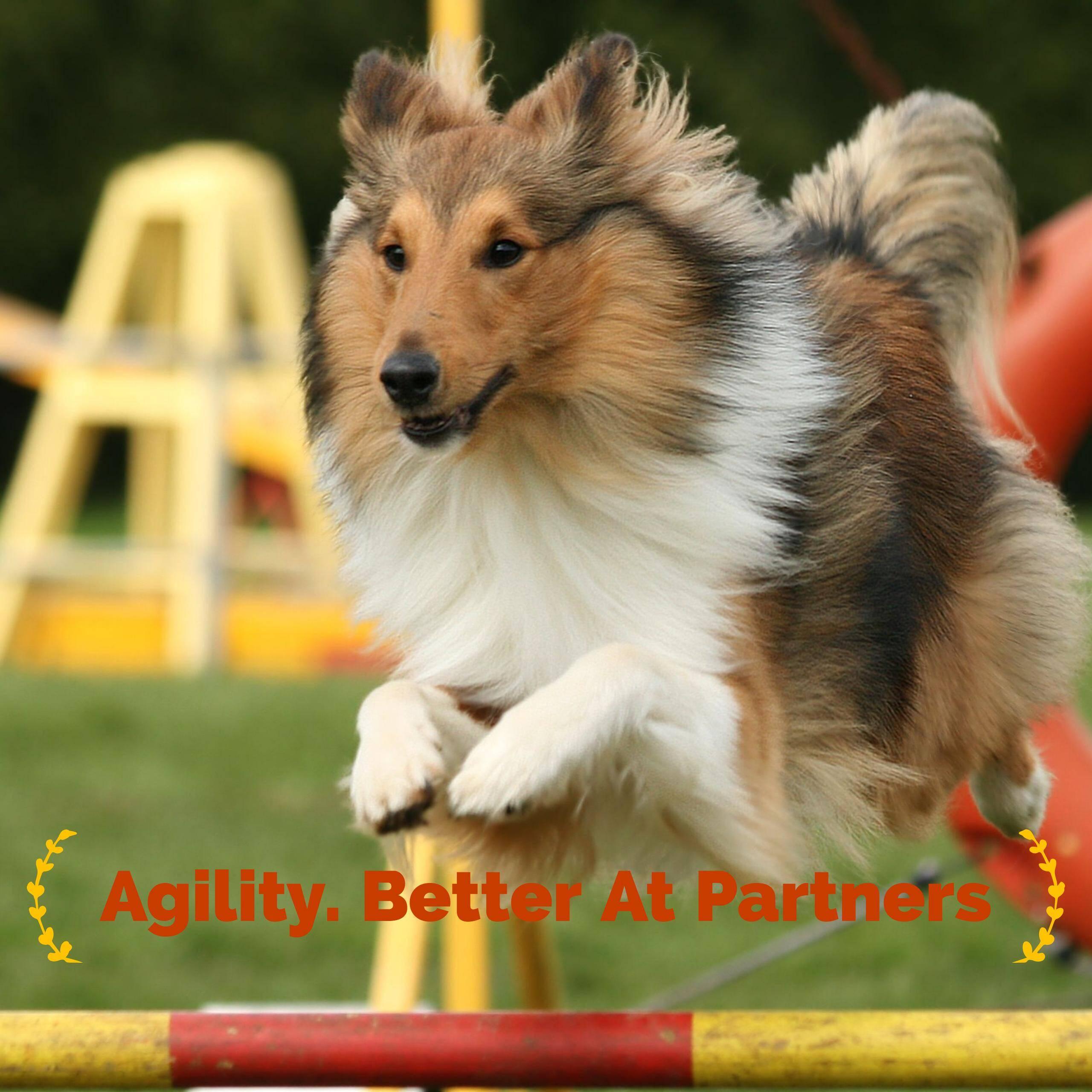 Best Dog Training Agility