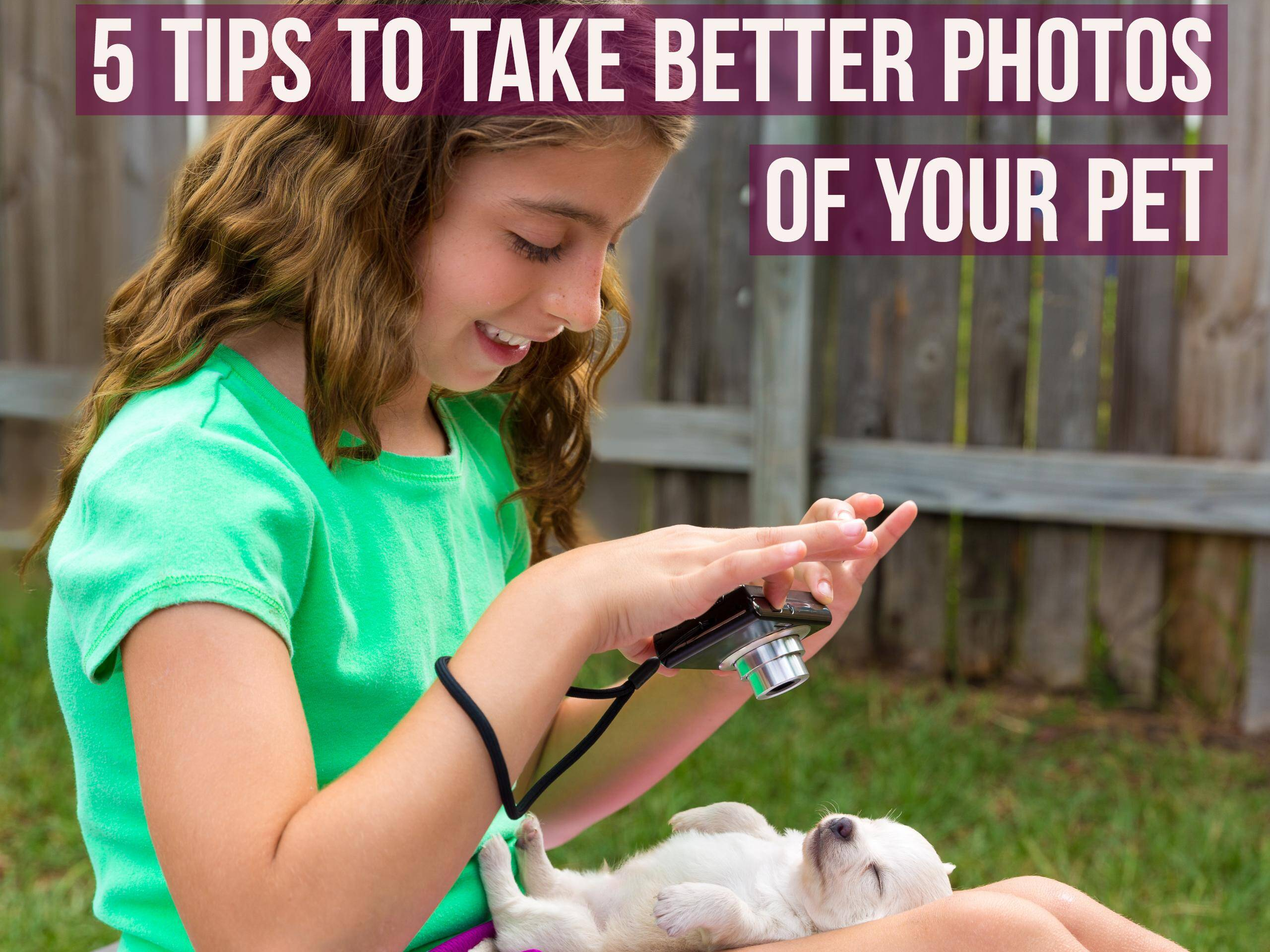 5 Tips To Take Better Photos of Your Pet