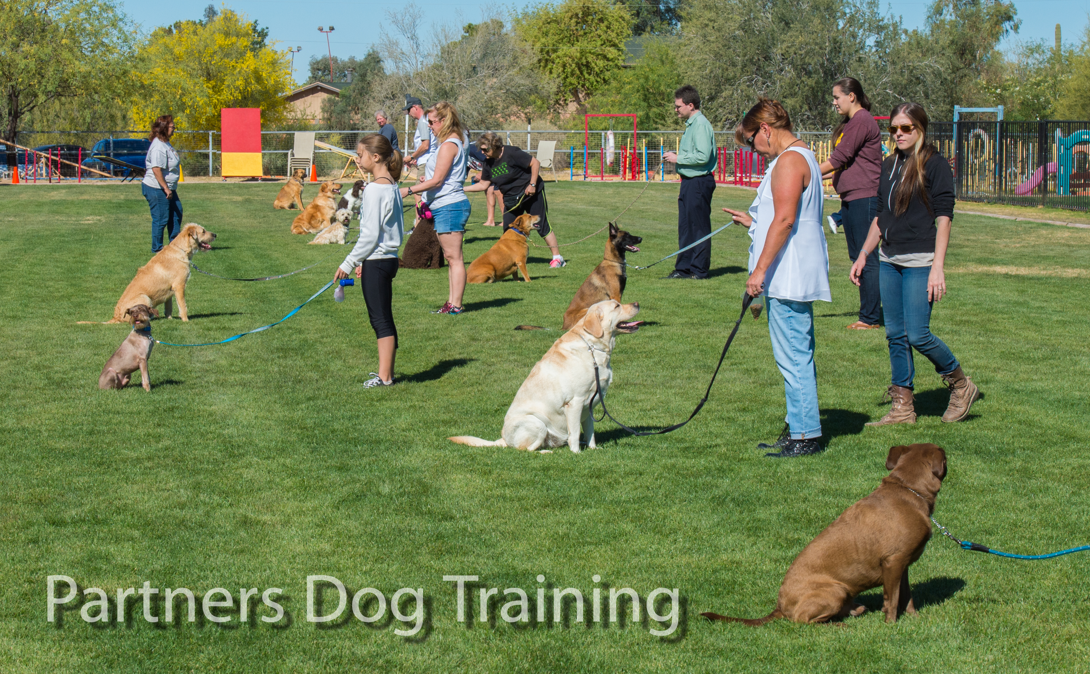 Best Dog Training Group Class