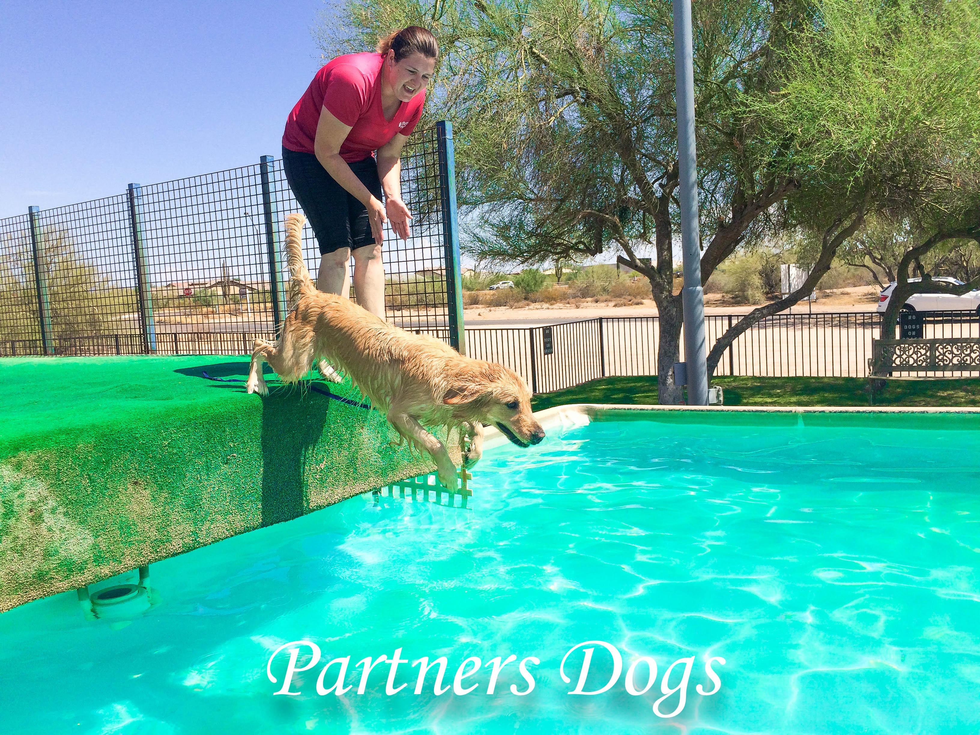 Partners Dog Training Dock Diving