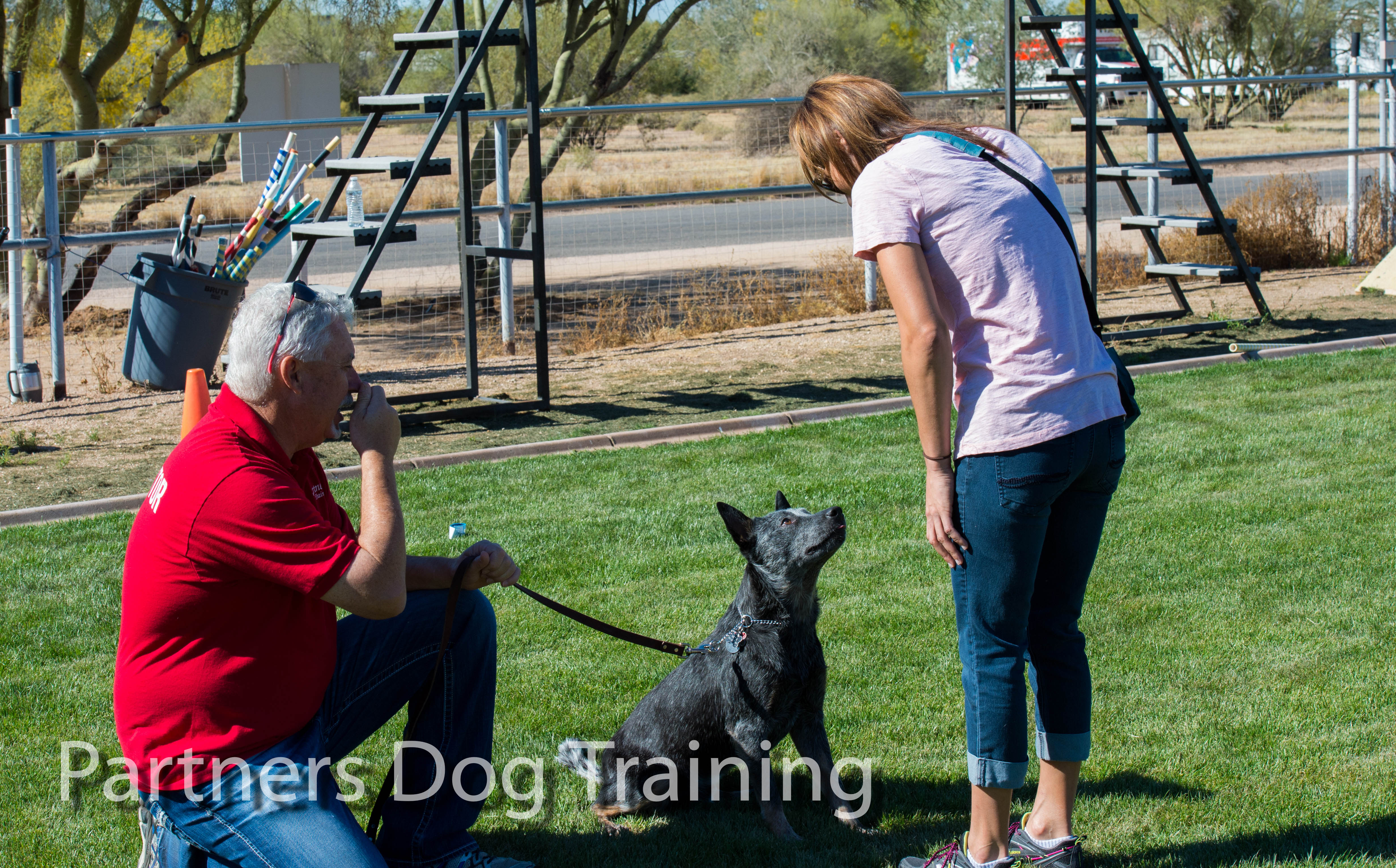 Best Dog Training Private Lessons