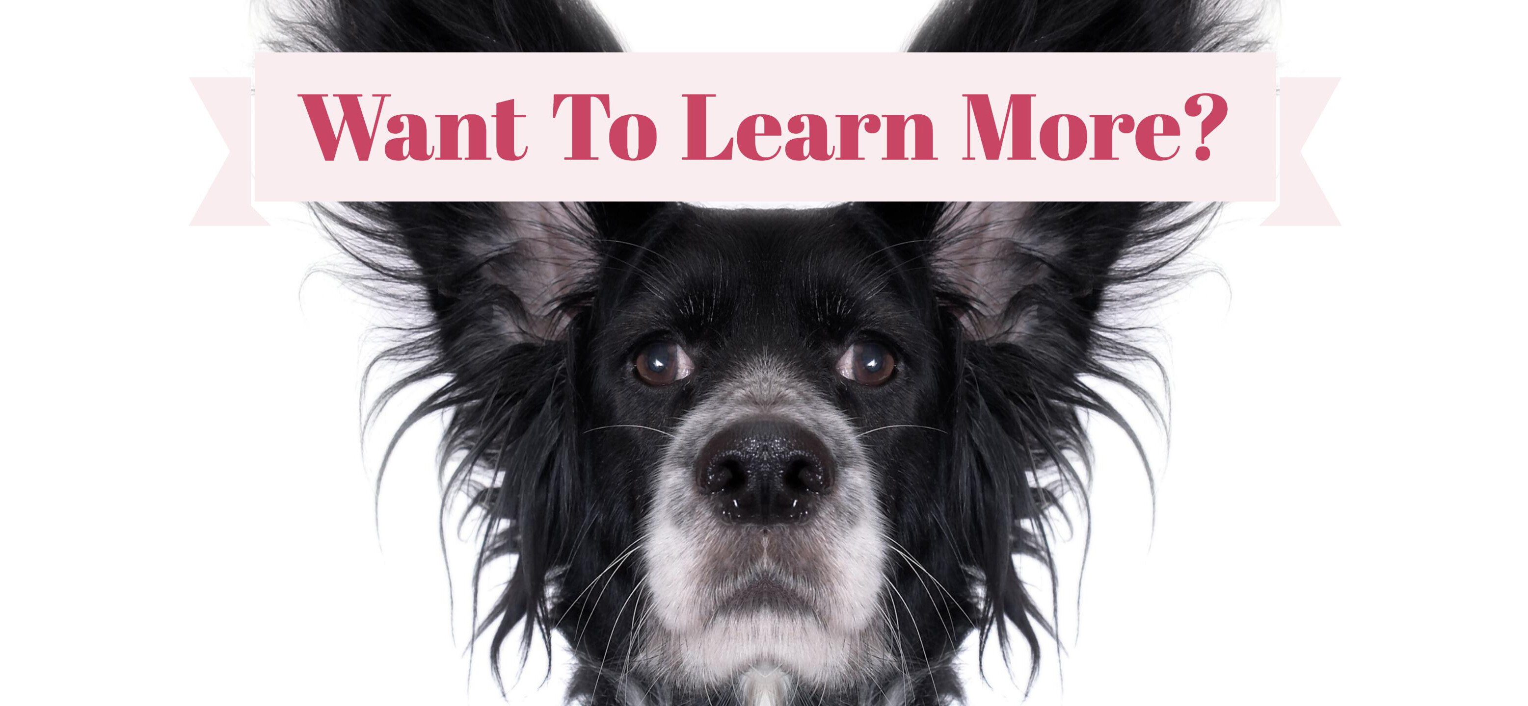 How To Become A Dog Training Instructor