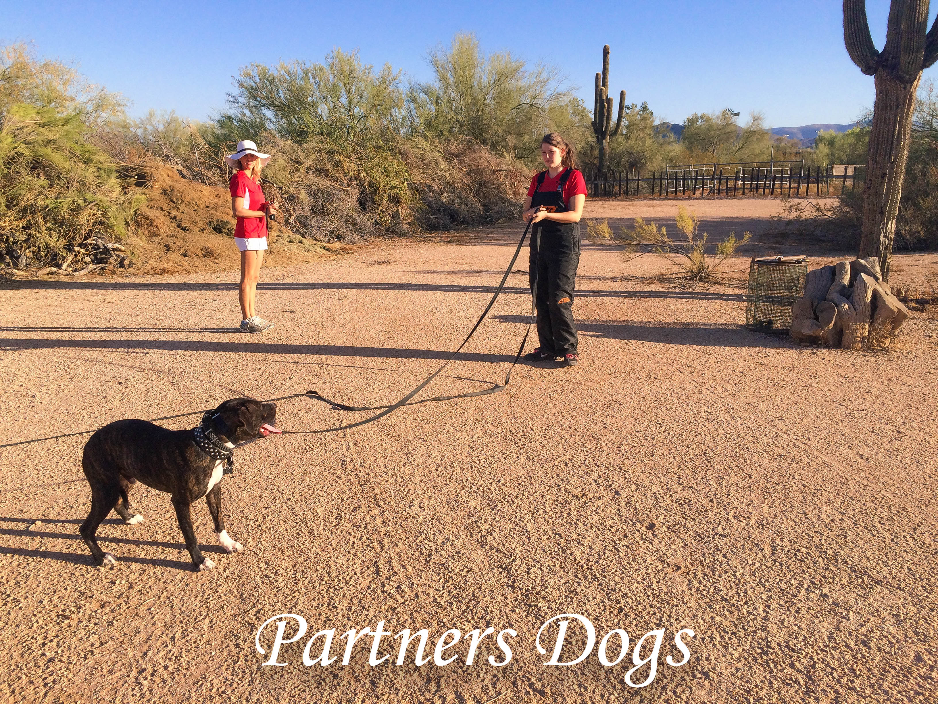 Partners Snake Avoidance, Rattlesnake Avoidance Training, Partners Dogs, Partners Dog Training, Snakeproofing, stopping dogs from attacking rattlesnakes, dog avoids rattlesnakes, how do i get my dog to stay away from rattlesnakes.