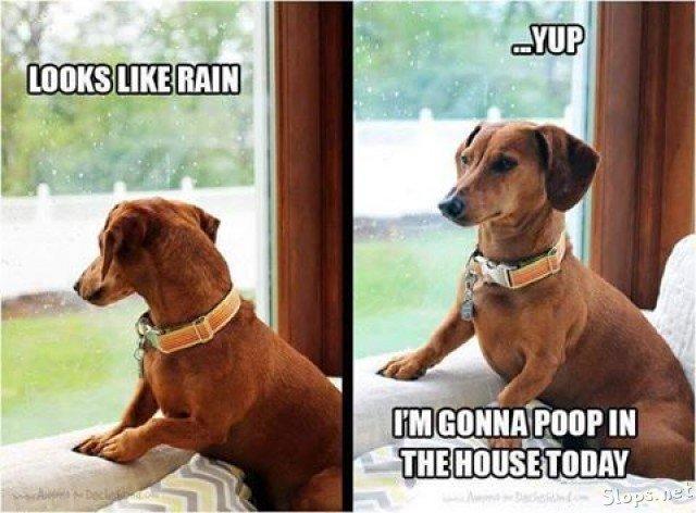 Gonna poop