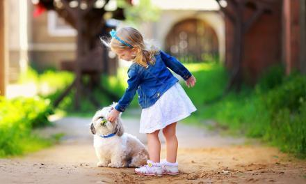 Tips & Tricks to Training Little Dogs