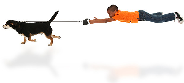 Dog Leash Training Tips