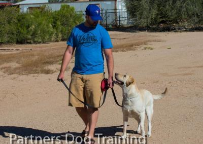 dog group classes walking at heel