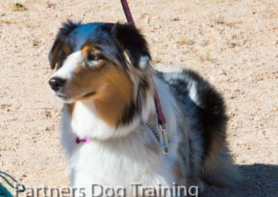 Group classes, how to teach your dog the down