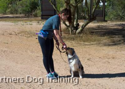 Group classes, motivational training, teaching dogs with treats