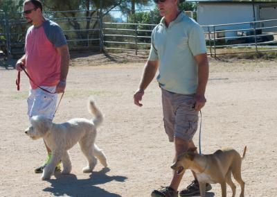 _D4D9551dog group classes walking at heel