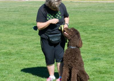 Group classes, how to teach your dog to sitGroup classes, how to teach your dog to sit