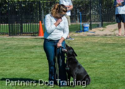 Group classes, how to teach your dog to sit
