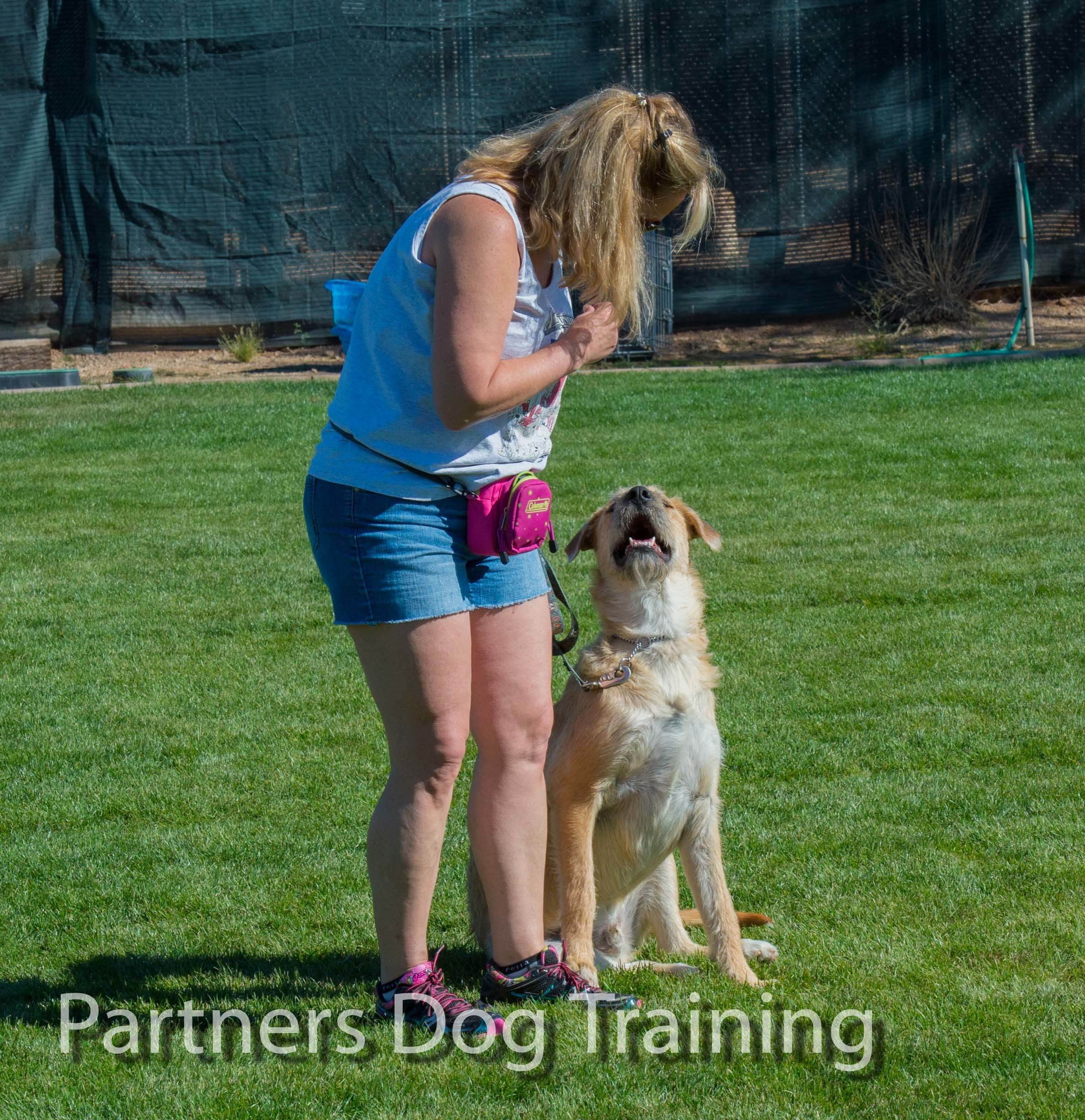 partners dogs training