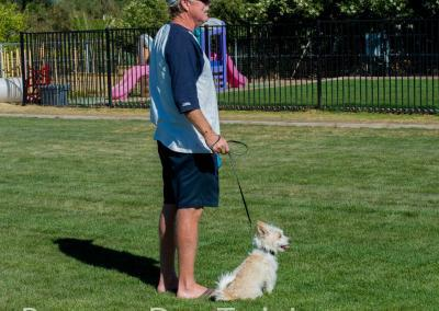 Group classes, how to teach your dog to si