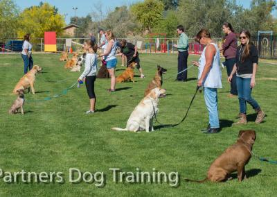 Group classes, how to teach your dog to stay