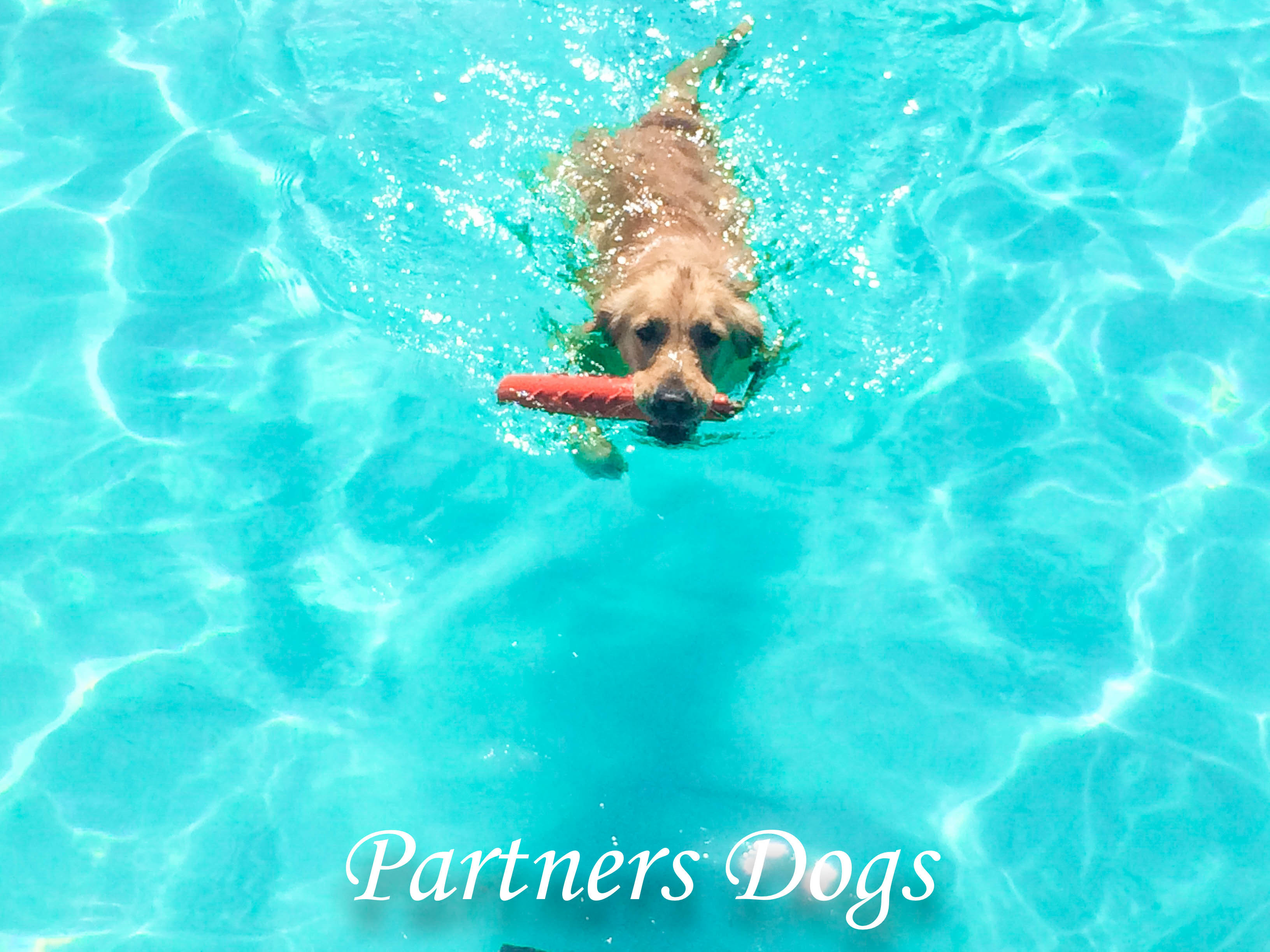 Partners dogs
