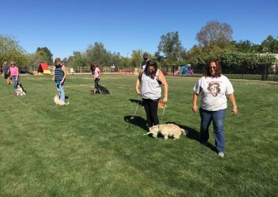 group classes, how to teach your dog to walk at heel