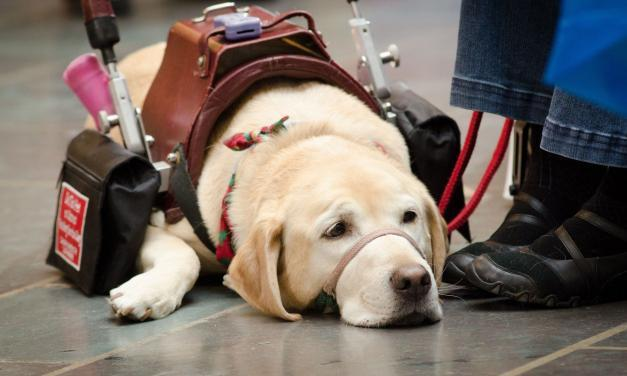 How to Stop Badly Behaved Service, Therapy, and Emotional Support Dogs