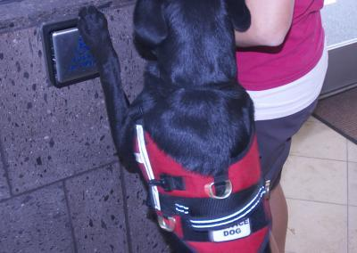 great service dogs working, how to stop badly behaved service, therapy, and emotional support dogs