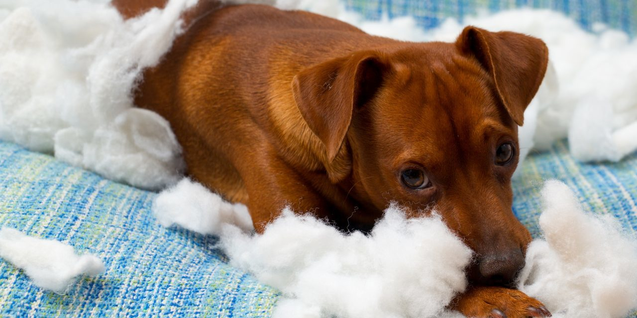Does your dog CHEW your life up?