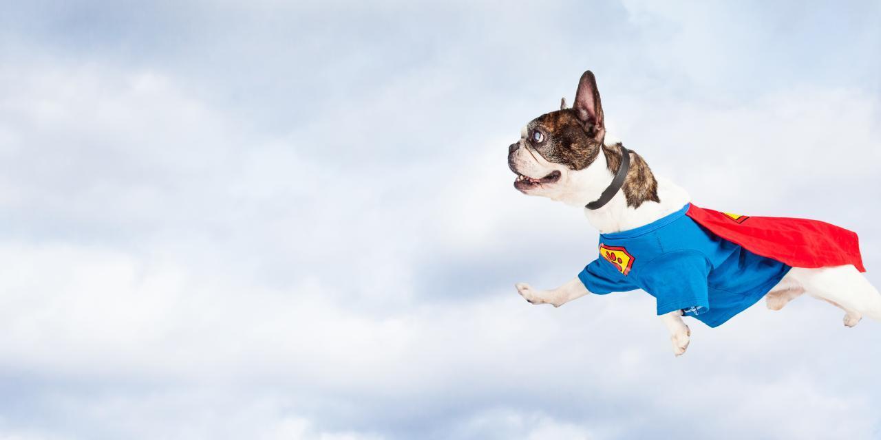 How To Teach Your Dog Tricks