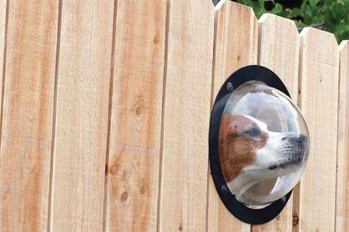 Dog peek Windows