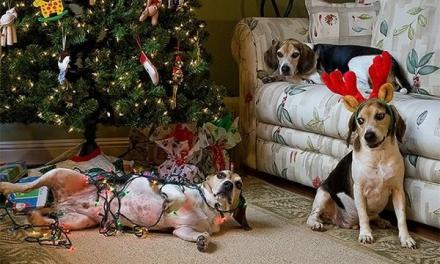 3 Ways to Stop Your Pet From Wrecking Decorations