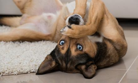 6 Brain Games to Play With Your Dog