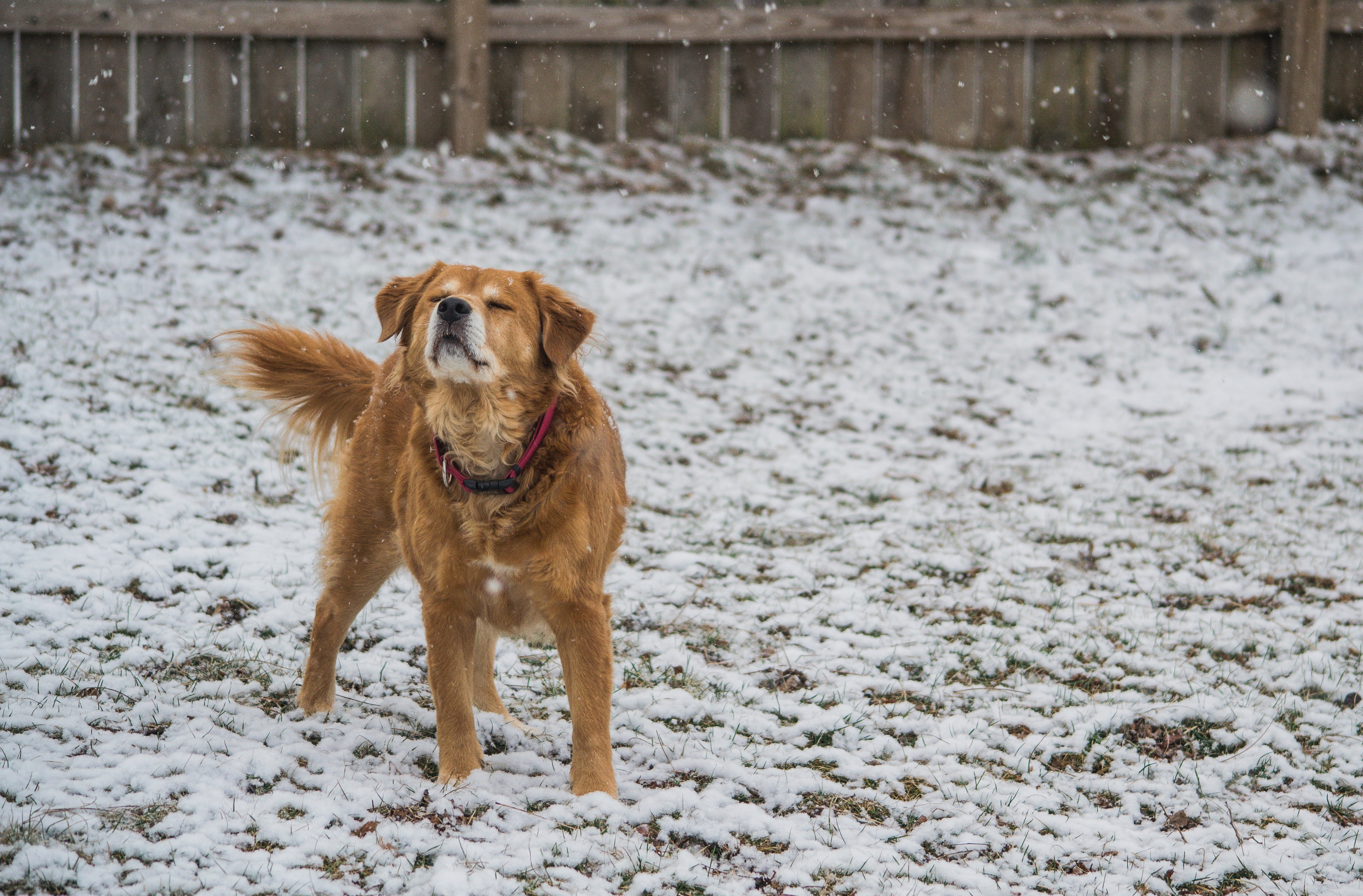 5 Ways to Spend Holidays with Your Pup