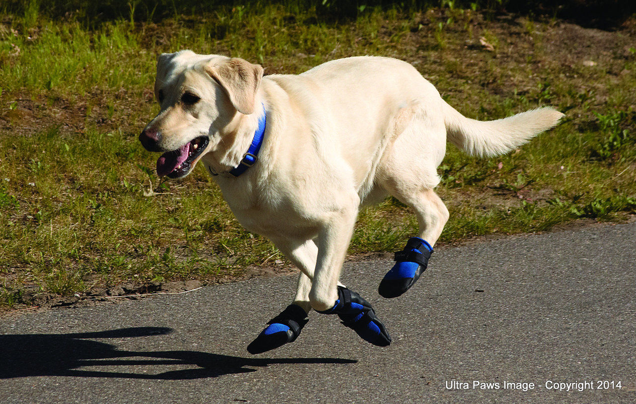 Dog booties like these