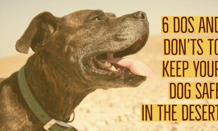 6 Dos and Don'ts To Keep Your Dog Safe In The Desert