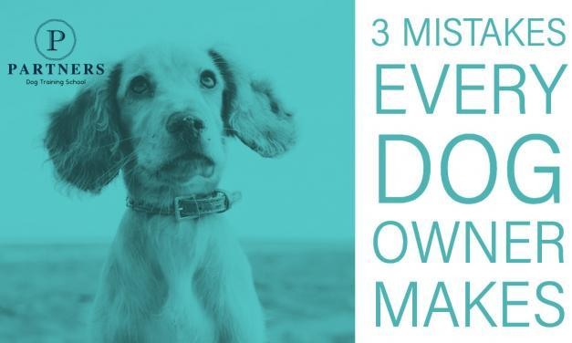3 Mistakes Every Dog Owner Makes