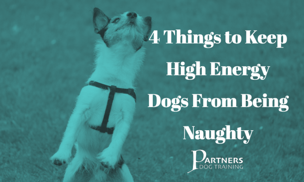 4 Things to Keep High Energy Dogs From Being Naughty