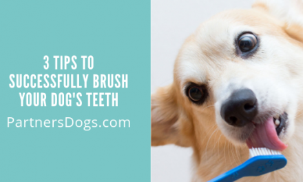 3 Tips to Successfully Brush Your Dog's Teeth
